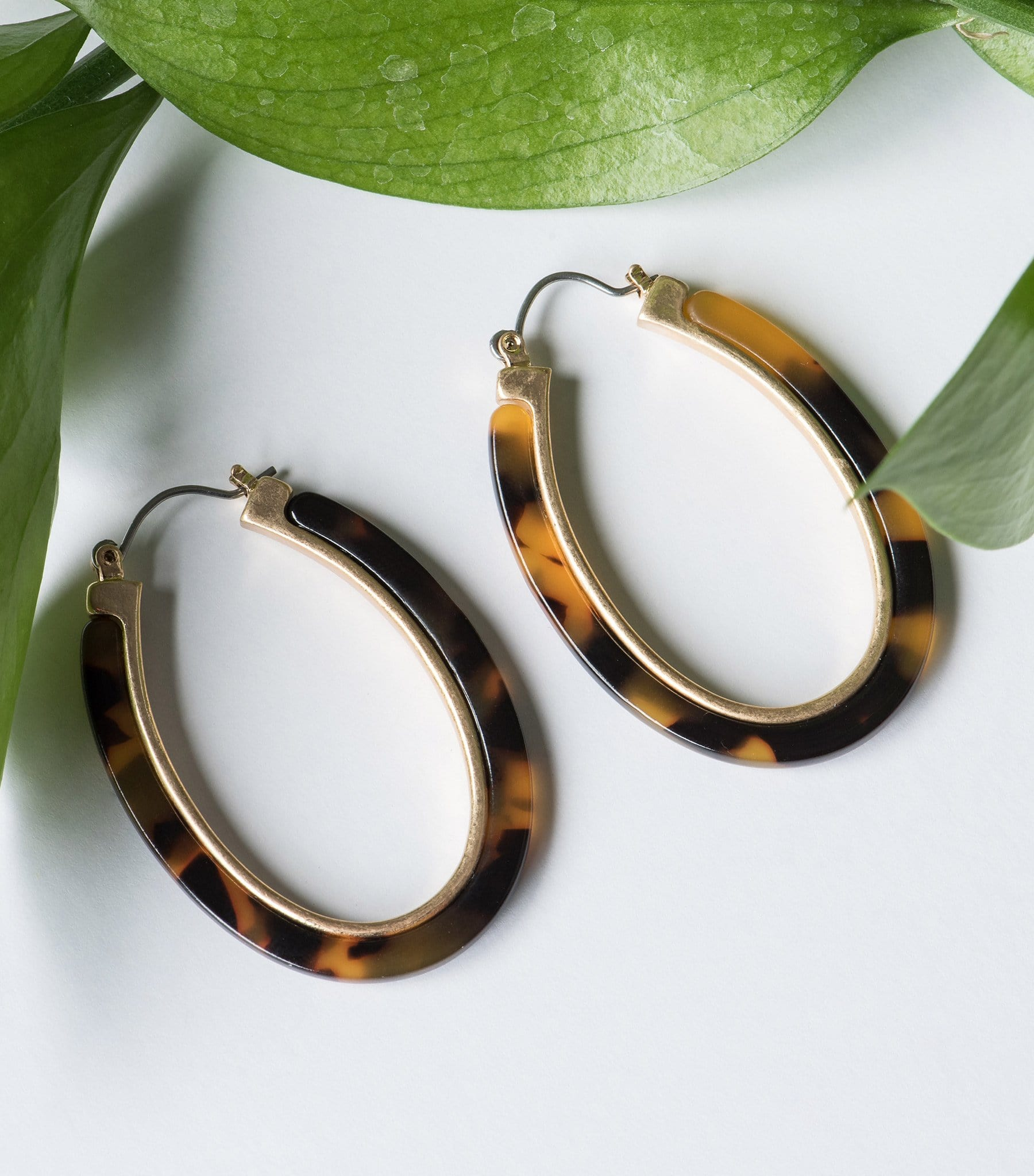 Tortoise  Shell Oblong Hoops