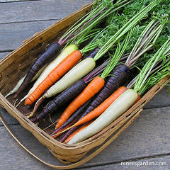 Multi colored carrots in a basket