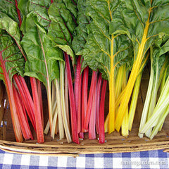Different colored chard in a basket on the table
