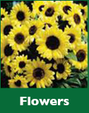 Flowers Gardening Resources