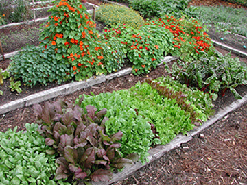 June Is Still Prime Planting Season Renees Garden Seeds