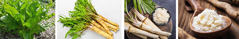 Collage of various horseradish views: growing, picked, peeled, ground