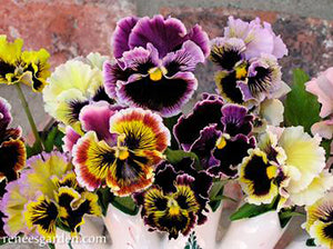 Victorian Posy Pansies