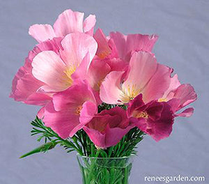 Dusky Rose Poppies