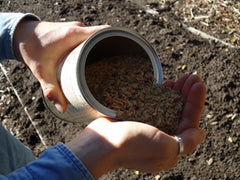 Scatter Garden contents of seeds and rice hulls being poured into hand.