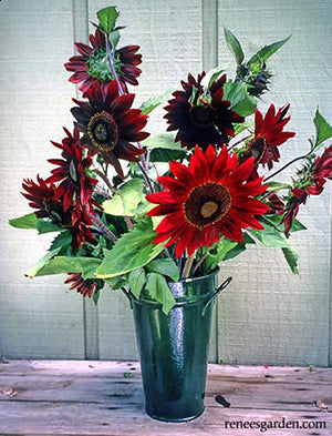 Chocolate Cherry Sunflowers