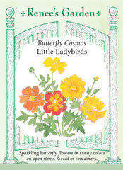 Little Ladybirds