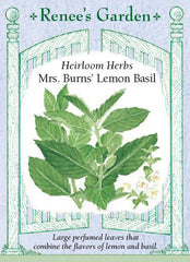 Mrs. Burns' Lemon Basil