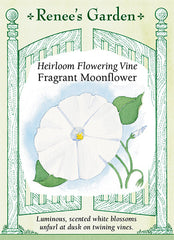 Fragrant Moonflower