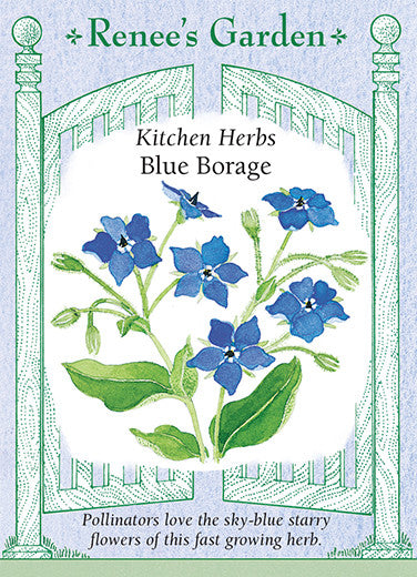Blue Borage