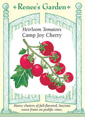 Camp Joy Cherry