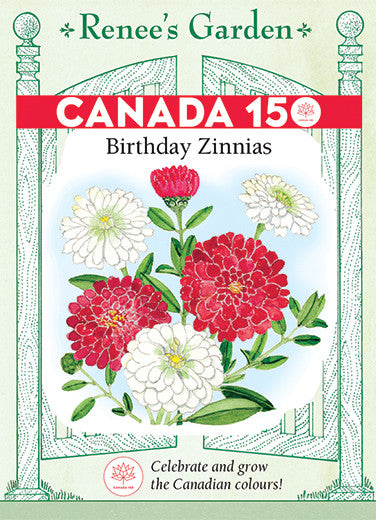 Birthday Zinnias