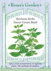 Sweet Green Basil