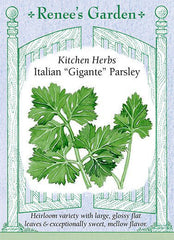 "Italian ""Gigante"" Parsley"