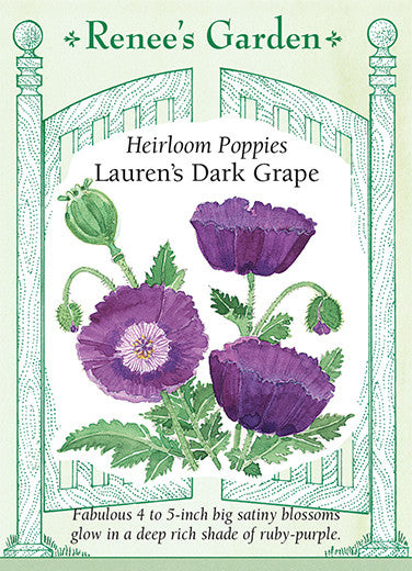 Lauren's Dark Grape
