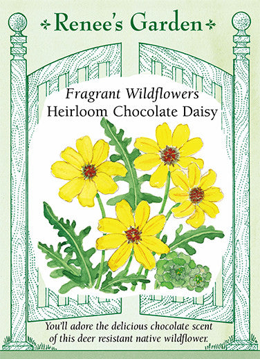Heirloom Chocolate Daisy\' Fragrant Wildflowers | Renee\'s Garden Seeds