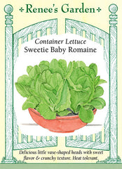 Sweetie Baby Romaine