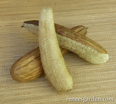 Count Non-GMO Non-Hybrid 50 for Growing Both Vegetable and Personal Care Sponge Smooth Loofah Gourd Seeds