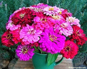 Berry Basket Cutting Zinnias Renee S Garden Seeds