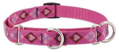 "Lupine 3/4"" wide PUPPY LOVE Combo Martingale Adjustable Dog Collar size 14-20"""