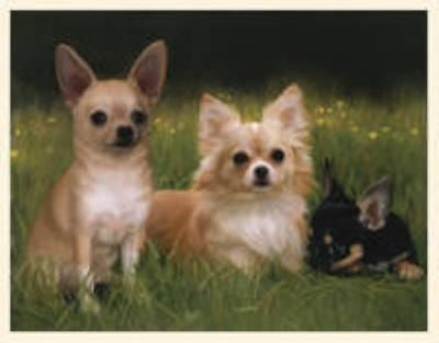 CLEARANCE..Dog Breed Paper CHIHUAHUA Boxed Notecards 10 per box