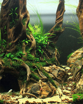 aquascaping mexico