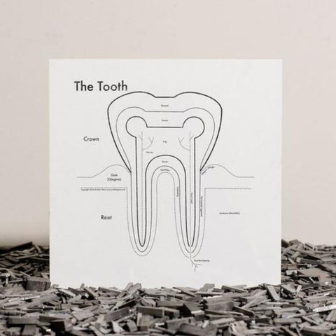 The Tooth Print