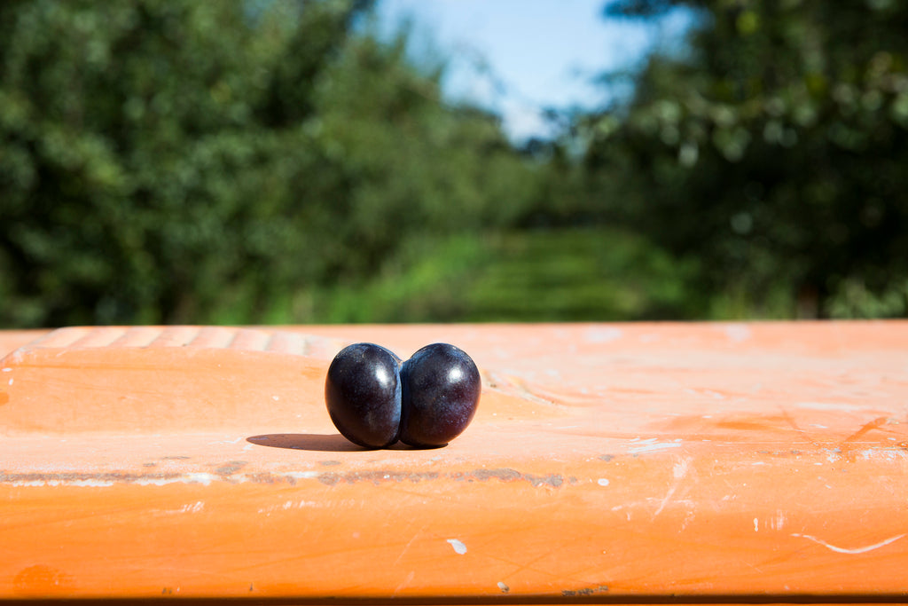 What is a Damson?