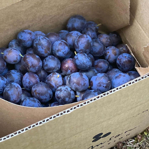 Fresh Damson Plums