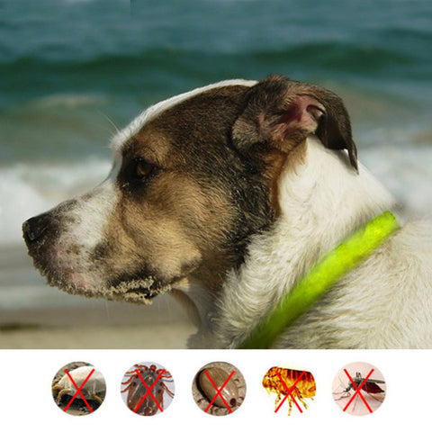 Pet Dog Cat Flea Repellent Collar Dog Cat Health Supplies Safe Human Insect repellent Wristband flea Collar