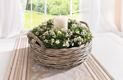 Plant Flower Basket