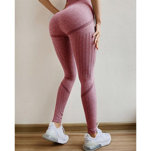 The All-Season Razor Contoured High Waist Seamless Yoga and Gym Leggings Yoga Pants AJISSI Sportwear Store