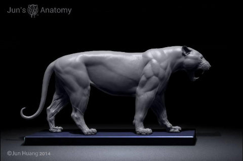 "Tiger Anatomy Model open-mouth ""Roar"" head"