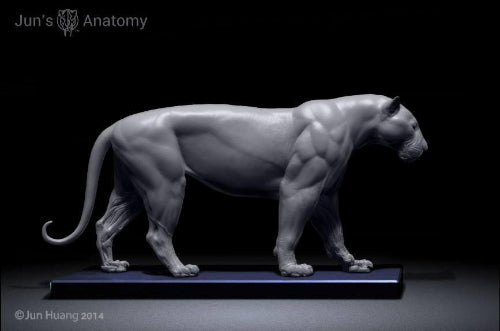 Tiger Anatomy model 1/6th scale - flesh & superficial muscle – Jun\'s ...