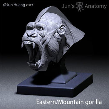 "Eastern/Mountain Gorilla open-mouth ""Roar"" head model"