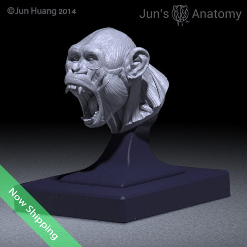 "Bonobo Anatomy Model open-mouth ""Roar"" head"