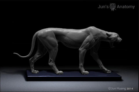 Cheetah Anatomy model 1/6th scale - flesh & superficial muscle