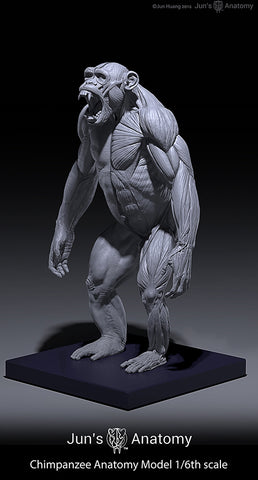 Chimpanzee Anatomy Model 1/6th scale