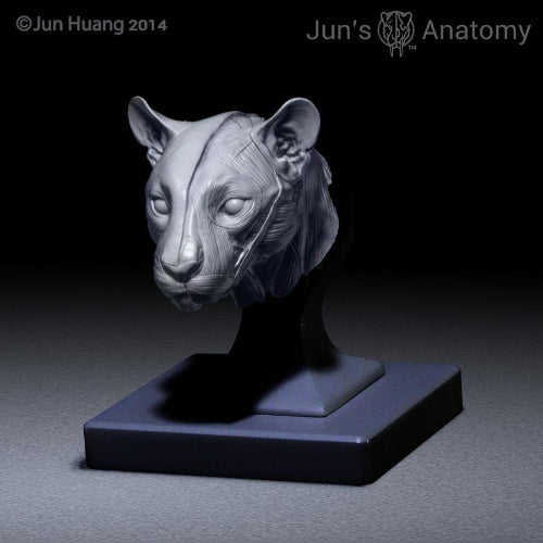 Cougar Anatomy model 1/6th scale - flesh & superficial muscle ...