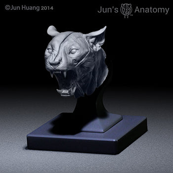 "Cougar Anatomy Model open-mouth ""Roar"" head"