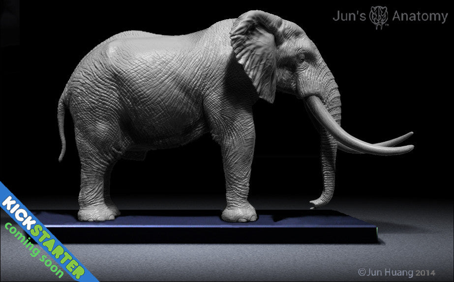 Elephant Anatomy model 1/20th scale v.1 – Jun\'s anatomy