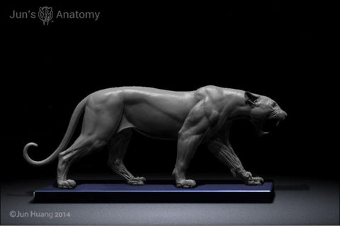 Leopard Anatomy model 1/6th scale - flesh & superficial muscle