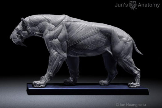 Smilodon Populator model, 1/6th scale - flesh & superficial muscle ...