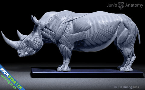 Rhino Anatomy model at 1/16th scale - flesh & superficial muscle