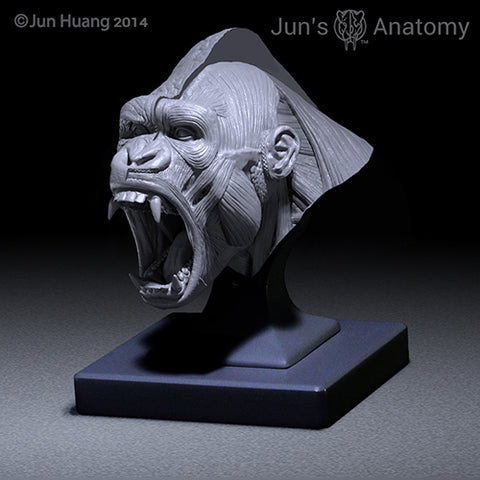 "Western Lowland Gorilla Anatomy model open-mouth ""Roar"" head"