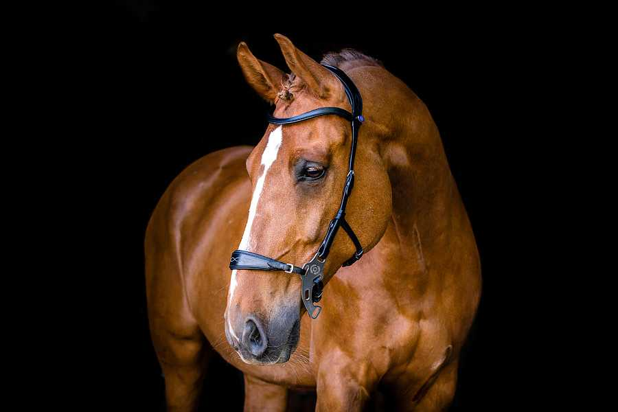 Hackmore Bridle by PS of Sweden