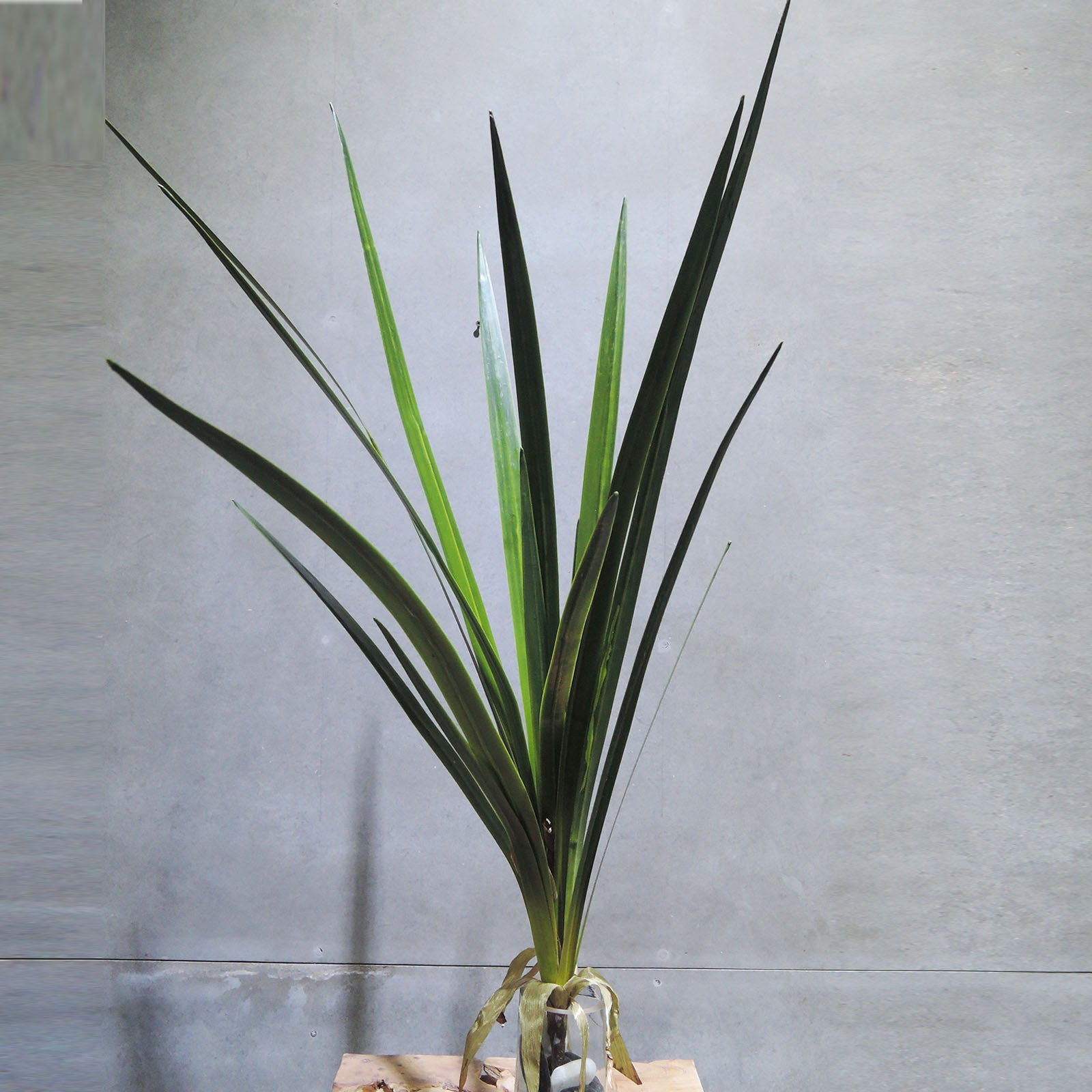Handmade   decorative artificial plant XMXJP-XF0011L