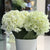 Handmade   decorative artificial plant JZT-J3021-WH