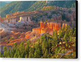 Bryce Canyon National Park - Canvas Print