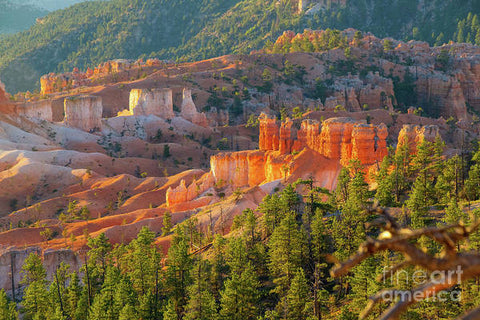 Bryce Canyon National Park - Art Print